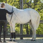 Wieviel Handarbeit braucht (m)ein Pferd?