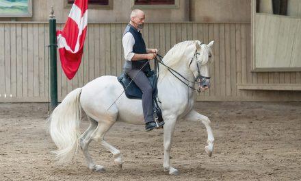 Reitersitz und Gang beurteilen RK1