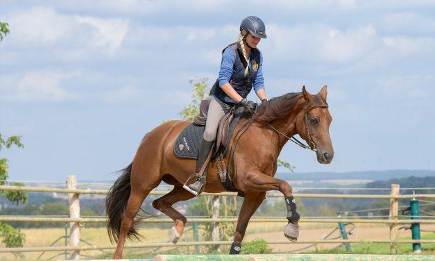 Sabine Mosen: So werden Remonten auf leichte Art zu Reitpferden