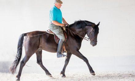 Die Pferd-Mensch-Beziehung